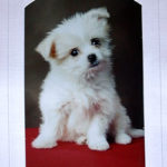 A puppy, wow he was a yapper alright!